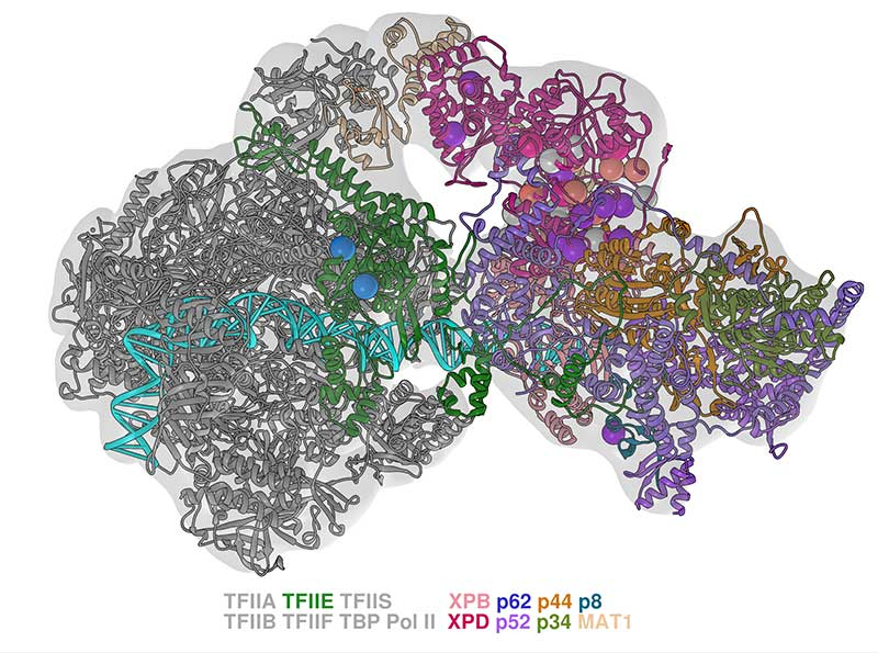 A study led by a Georgia State chemistry researcher provides new insights into how genetic mutations that lead to cancer and other diseases form in humans, building a foundation for more targeted work to develop treatments for a wide range of diseases. The image shows a computer generated map of mutations resulting from the resaerch.