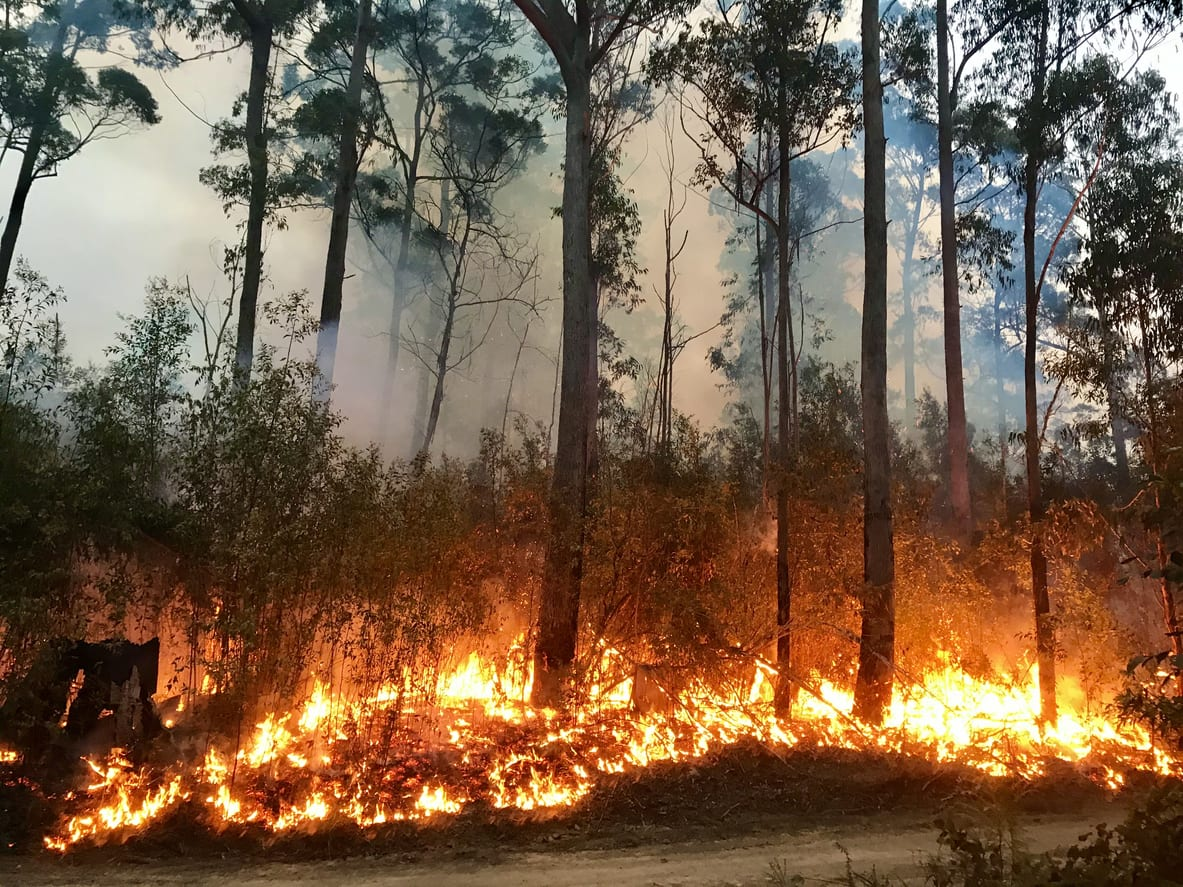 Wildfire burning a forest